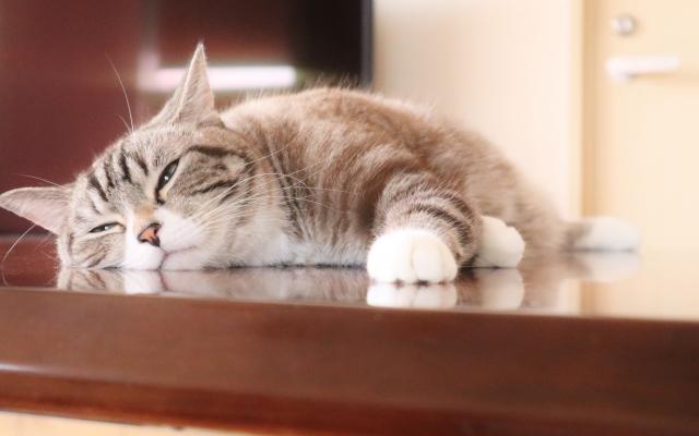 疲れやすい理由は、五感への刺激に反応しすぎているから